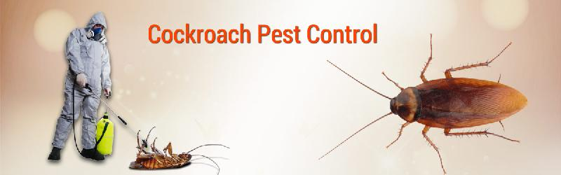 pest control cockroaches
